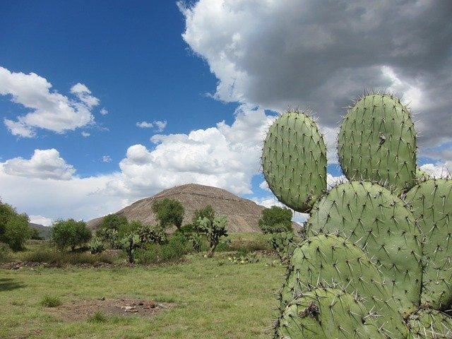 velký kaktus
