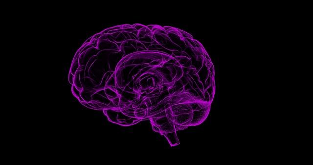 fialový mozek