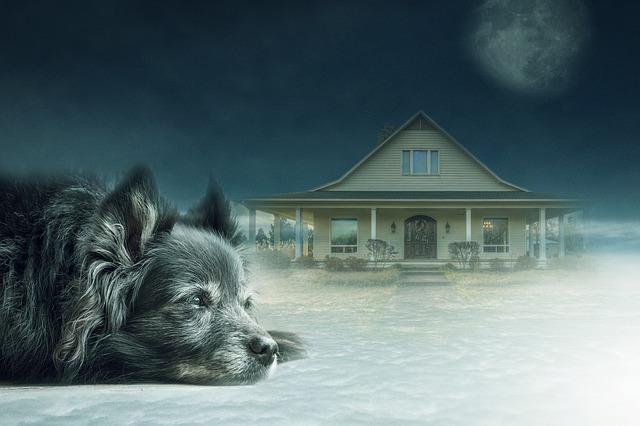 pes před domem