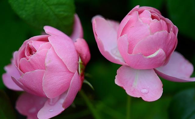 velké květy
